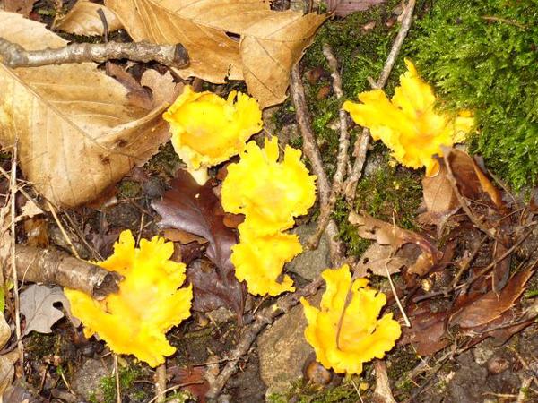 Gite rural boisseau - Les champignons de jardin sont ils comestibles ...